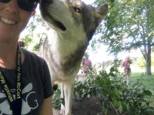 Wolf Park Training1